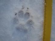 1_Hund_Dreisprung_2017-01-15__5_.JPG